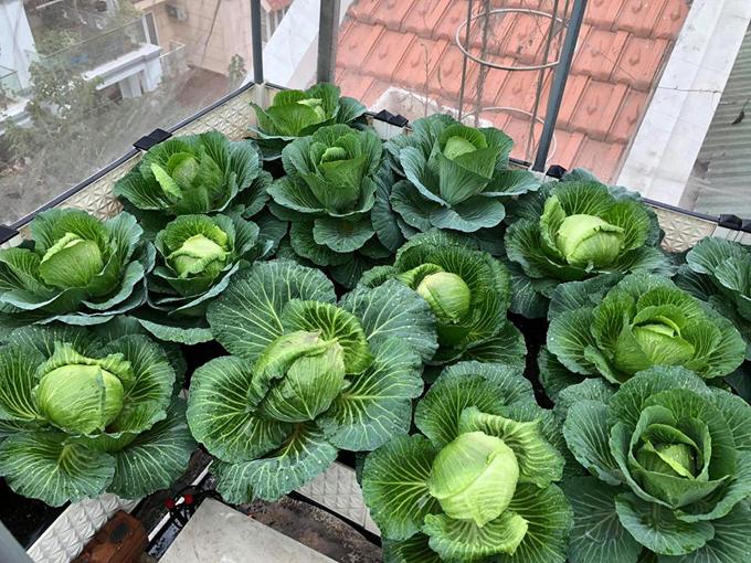 Vườn dâu đỏ rực trên sân thượng 100 m2 - 11
