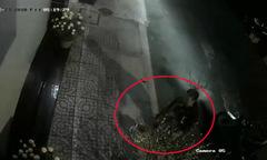 Ba nam thanh niên đổi trộm cây đào nhanh như chớp trong đêm