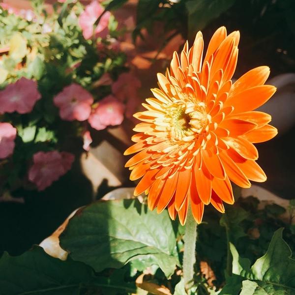 Nhiều người ghé thăm căn biệt thự của gia đình chị Dung đều thốt lên: Đẹp như tiên cảnh.Bà mẹ hai con mong ước những sắc màu rực rỡ của các loại hoa sẽ mang đến niềm vui, may mắn cho cả nhà trong năm mới.