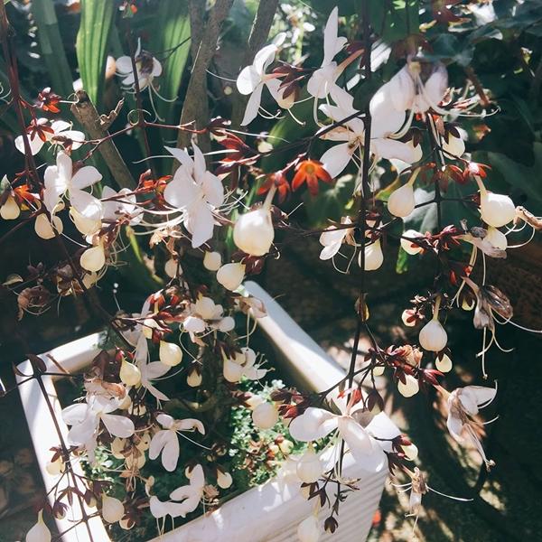 Buổi chiều là khoảng thời gian hạnh phúc với chị Dung vì được thư thả đi dạo trong khu vườn, tỉ mỉ chăm chút từng khóm hoa.