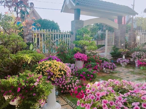 Những bôngdạ yến thảo, ngọc thảo và triệu chuông nở rộ trong tiết mưaphùn của những ngày đầu năm.