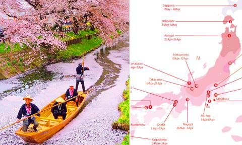 Thời điểm đến Hàn Quốc và Nhật Bản để 'săn' được hoa anh đào