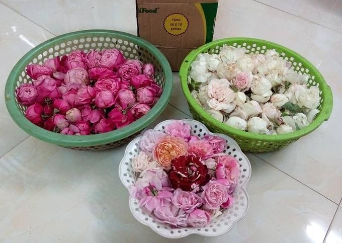 Thỉnh thoảng, các nhà hàng xóm có trẻ bị ho thường sang nhà Sang xin hồng bạch đễ chữa bệnh. Sau mỗi lứa hoa, Sang hay cắt đi tặng bạn bè, người thân hoặc làm nước hoa hồng hay trà hoa hồng để uống.