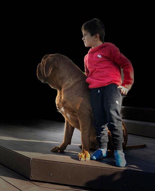 Nhóc Thiago chụp ảnh chững chạc bên chú chó cưng to lớn của gia đình.