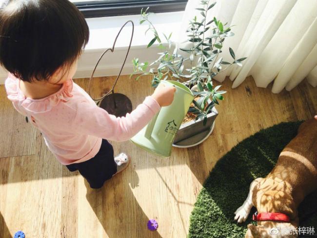 Trương Tử Lâm cũng tiết lộ, con gái côđặc biệt yêu thích thiên nhiên, cô bé thích làm vườn, tưới cây, ngắm hoa...