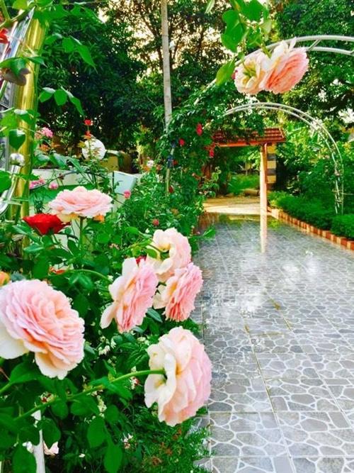 Bà mẹ hai con đầu tư vòm inox không gỉ, lát sân gạch và mua hạt giống hoa hồng, cây ăn trái với chi phí gần 100 triệu đồng.