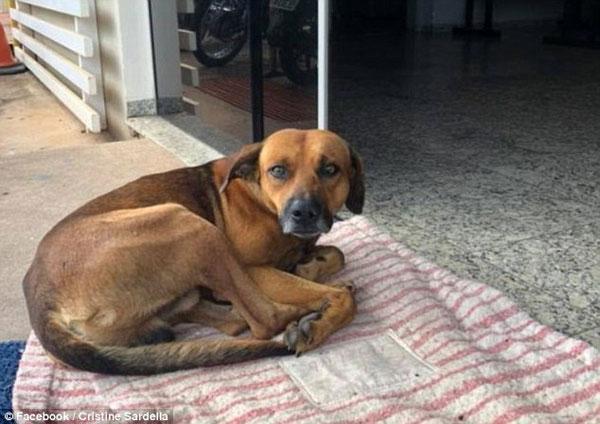 Con chó được nhân viên bệnh viện chăm sóc.