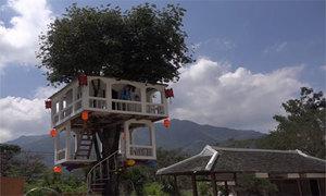 Căn nhà hai tầng trên cây thị ở Nha Trang
