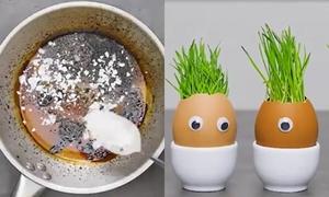 Cách tận dụng vỏ trứng cho bà nội trợ và thợ làm vườn