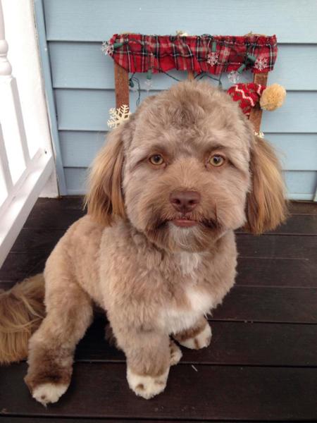 Yogi mới tròn một tuổi hồi tháng trước. Ảnh: The Sun