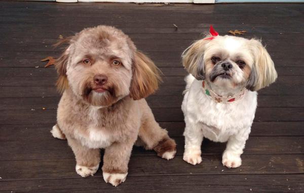 Yogi và người bạn cùng nhà Daria. Ảnh: The Sun