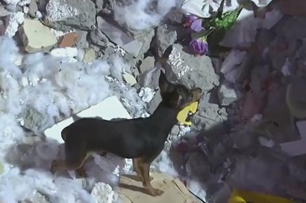 Nino quyết nấp trong đống đổ nát của ngôi nhà. Ảnh: CEN