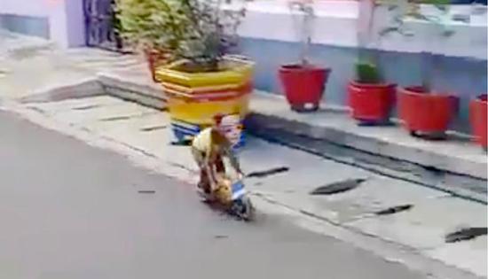 Con khi đeo mặt nạ lái xe máy tí hon. Ảnh: News Dog Media
