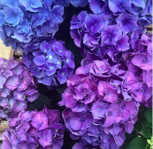 Những bụi hoa trồng quanh vườn đượcMonique yêu thích và chăm chút. Cô thường xuyên chụp ảnh cùng chúng rồi chia sẻ trên mạng xã hội. Trang Instagram củaMonique thu hút nhiều lượttheo dõi.