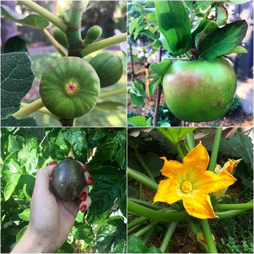 Cuộc sống gắn liền với thiên nhiên của cô gái Pháp yêu làm vườn - 11