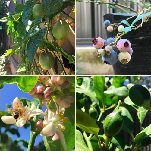 Monique tìm thấy ý nghĩa cuộc sống khi dành trọn tình yêu cho khu vườn. Từ một người chưa từng làm vườn, cô dần yêu thích việc chăm chút những mầm nhỏ.