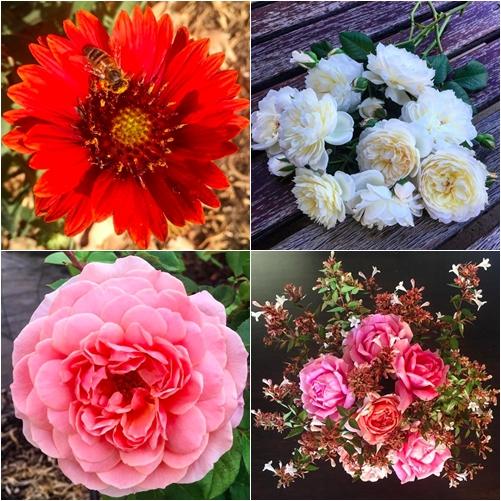 Cuộc sống gắn liền với thiên nhiên của cô gái Pháp yêu làm vườn - 13