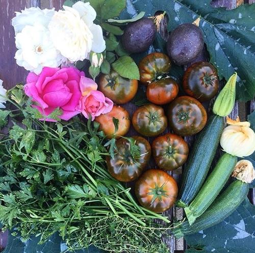 Mảnhvườn củaMonique như một trang trại thu nhỏ có đủ cây ăn trái, rau leo giàn, rau ăn lá và rau gia vị.