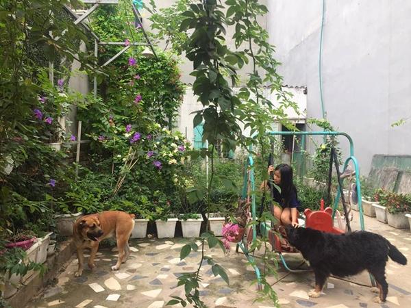 Gócsân rộng chừng 150 m2 bên hông nhà được vợ chồng chị Linh dành riêng làm sân chơi cho các con. Chị nuôi hai chú chó, vài con gà đẻ trứng và trồng giàn tầm xuân, hoa jun tại đây.