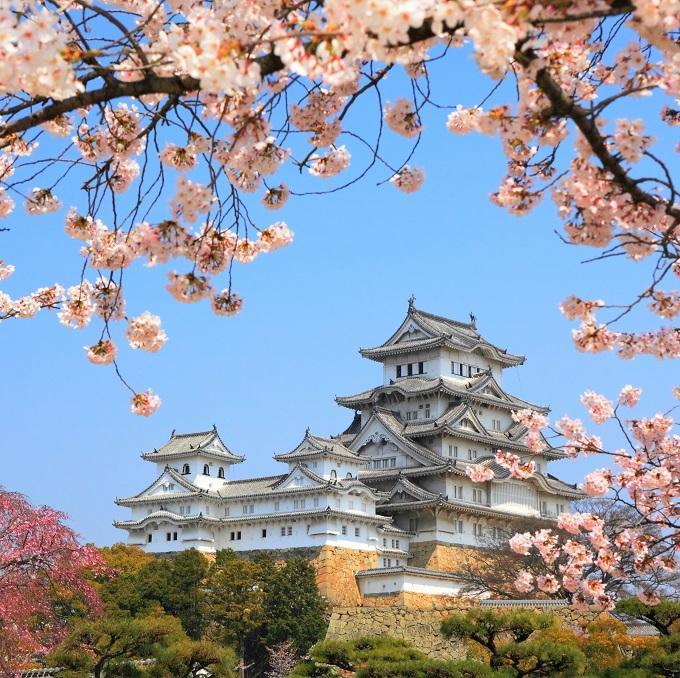 Tham gia chùm tour đến Nhật Bản, du khách sẽ thưởng thức mùa hoa xuân độc đáo.