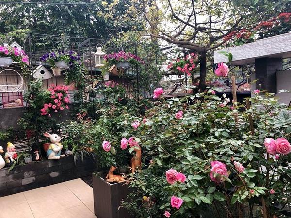 Những giống hồng cổ được chị Linh yêu thích hơn hồng ngoạibởi chúng dễ tính, sai hoa, ít sâu bệnh. Nữ kế toán ở Hà Nộitrồng thêmdạ yến thảo, ngọc thảo, hoa dừa cạn, hoa son môi theo mùa. Những giỏ hoa rực rỡ treo trên giàn hay trên ban công góp phầnđiểm tô cho khuôn viên nhà thêm màu sắc.