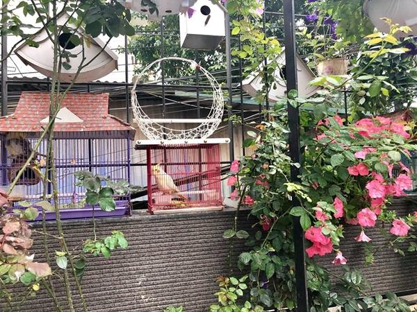 Chị Thùy Linh tập thói quen dậy sớm mỗi sáng để tưới hoa, cho chim ăn và dọn dẹp khoảng sân trước khi đi làm. Người phụ nữ 37 tuổi yêu cảm giác đón ngày mới bằng tiếng chim hót và ngắm nhìn những nụ hoa nở rộ sau nhiều ngày chăm sóc tỉ mỉ.