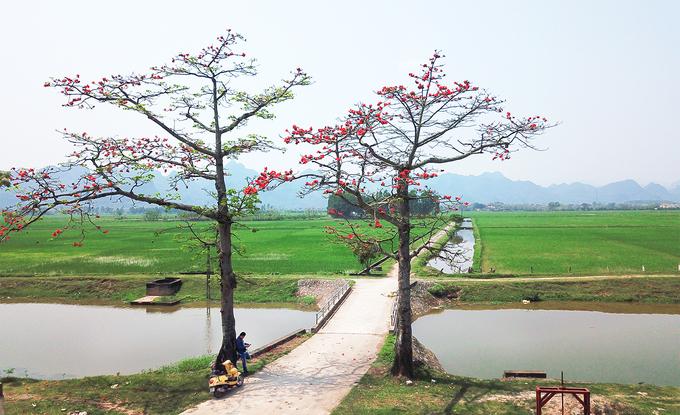 Hoa gạo tháng 3 chở bao thương nhớ