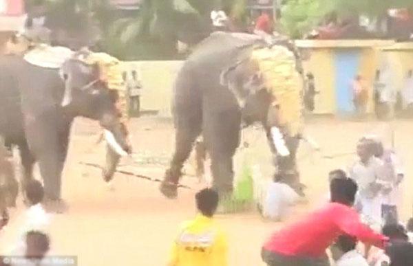 Những người tham gia lễ hội phải bỏ chạy toán loạn khi con voi trở nên hung hăng bất thường.