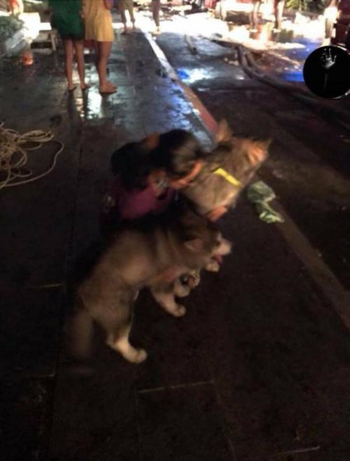 Khoảng khắc lúc hai mẹ con chú chó xuống đất an toàn.