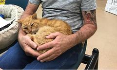 Mèo đoàn tụ với chủ sau 14 năm thất lạc trong bão