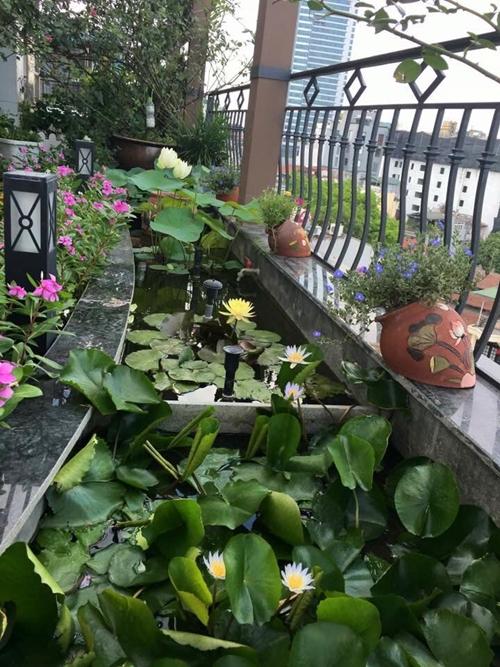 Nguồn dinh dưỡng chủ yếu chị Lan bổ sung cho hoa là lạc và đỗ tương. Cứ 10-15 ngày, chị bón 7-10 hạt lạc sống hoặc đỗ tương vào mỗi chậu.