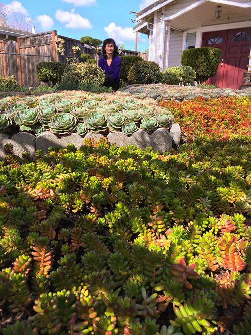 Suốt 7 năm qua, bà một tay gây dựng khu vườn có khoảng chục nghìn cây sen đá các loại. Vườn sen đá với khoảng chục nghìn cây của bà khiến nhiều người ngưỡng mộ. Họ thường gửi tin nhắn tới giao lưu và học hỏi kinh nghiệm làm vườn của bà. Tuy nhiên, do không rành Facebook, bà thường nhờ con gái là chị Thảo Nguyễn kết nối giúp.