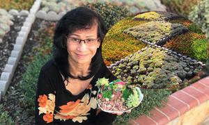 Mẹ Việt phủ kín khu vườn ở Mỹ bằng chục nghìn cây sen đá