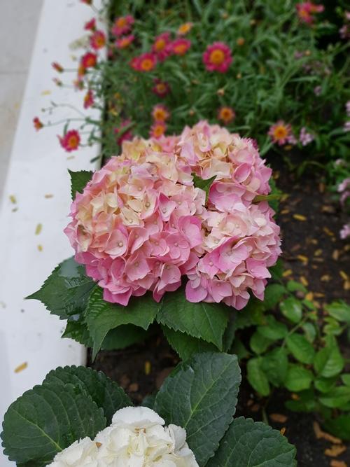 Người bạn nói với tôi: Thiền không nhất thiết là ngồi một chỗ mà là tập trung tuyệt đối cho một công việc. Tôi đã tập trung chăm vườn hoa, vườn rau mỗi ngày để cảm thấy được thư giãn và thoải mái. Ngắm những chiếc nụ bé xinh nở ra thành hoa với hương thơm nhè nhẹ thấy lòng thanh thản đến lạ, Thanh Thảo tâm sự.