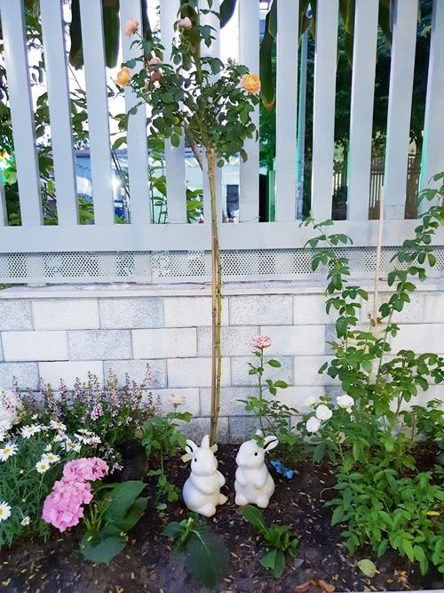 Những đóa hoa trong vườn được Thanh Thảo lựa chọn và cắt mang vào nhà cắm. Nữ MC hạnh phúc vì đượclàm mới không gian sốngbằng những nụ hoa do chính tay cô trồng.