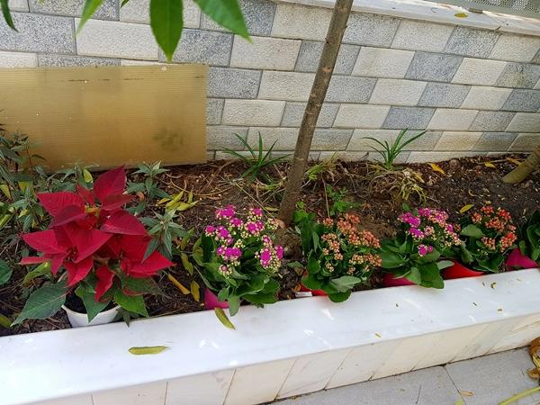 Nữ MC mong muốn có thêm nhiều thời gian để làm đầy khu vườn bằng nhiều loại hoa đẹp. Cô hy sọng sau vài mùa sẽ trở thành người thợ làm vườn thực thụ.