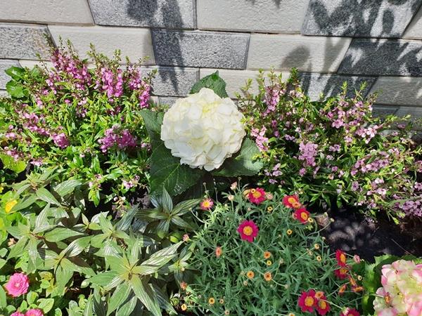 Trước đây, đều đặn mỗi tuần, Thanh Thảo đều mua hoa tươi về cắm. Sau đó nữ MC nảy ra ý tưởng tận dụng khoảng trống trước nhà trồng hoa phục vụ sở thích sống gần gũi với thiên nhiên. Hoạt động làm vườn giúp Thanh Thảo xả stress hiệu quả sau mỗi ngày làm việc căng thẳng.