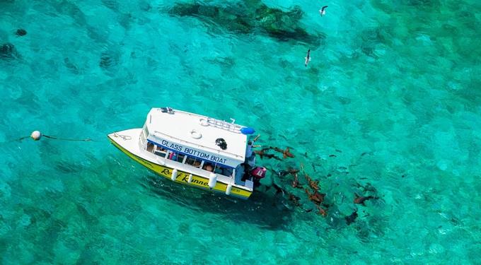 Chơi đùa cùng đàn cá mập hoang dã ở vùng biển Caribe
