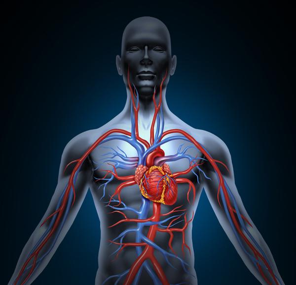 Phòng chống các bệnh lý tim mạch Theo Hiệp hội Tim mạch Hoa Kỳ, đi bộ cũng có tác dụng tương đương chạy bộ trong việc phòng ngừa các bệnh lý tim mạch hay đột quỵ. Đi bộ giúp cải thiện lưu thông máu, điều chỉnh huyết áp và loại bỏ cholesterol xấu.
