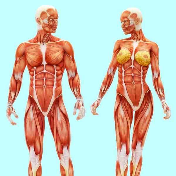 Tăng cường cơ bắp Đi bộ 10.000 bước mỗi ngày có tác động tích cực lên các cơ bắp tương đương với tập luyện cường độ cao trong phòng gym.