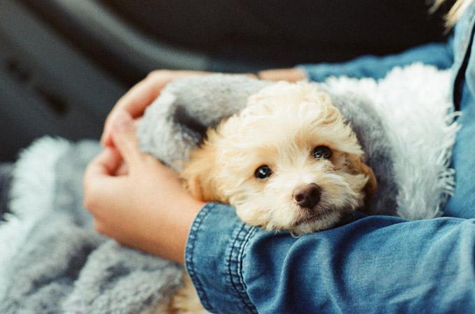 Nhiều công ty áp dụng chế độ nghỉ phép dành cho nhân viênnuôi thú cưng - Ảnh: Business insider