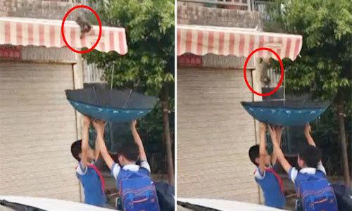 Hai bé trai dùng ô cứu mèo con mắc kẹt trên mái hiên