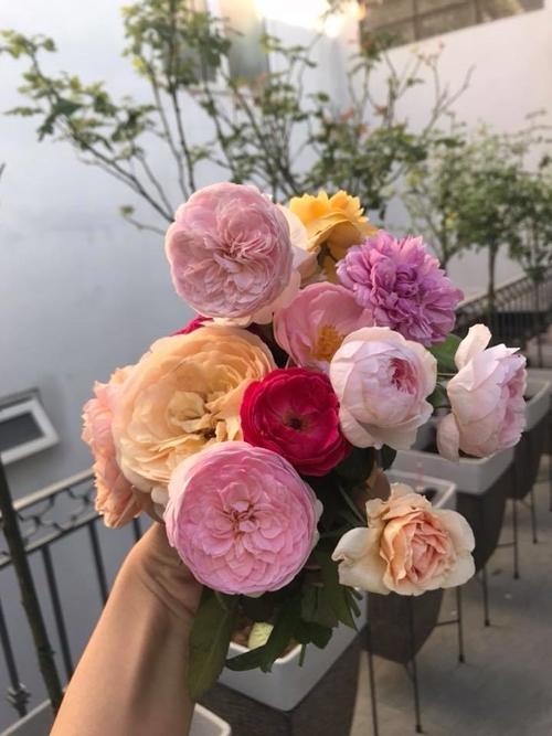 Ông xã chị Nguyễn Trang mê hoa không kém vợ. Con gái chị hay giúp mẹ tưới cây và ngắt những bông hồng đẹp nhất mang vào nhà cắm.