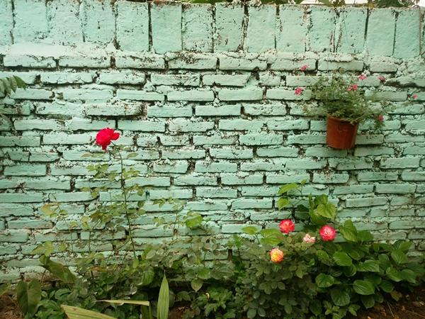 Chị Lan trồng những khóm hoa nhỏ bao quan khoảng sân 120 m2. Chị tận dụng vỏ chai, chậu nhựa cũ để biến hóa thành những giỏ hoa lạ mắt.