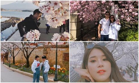 Sao Việt đua nhau đi ngắm hoa anh đào ở Nhật Bản và Hàn Quốc