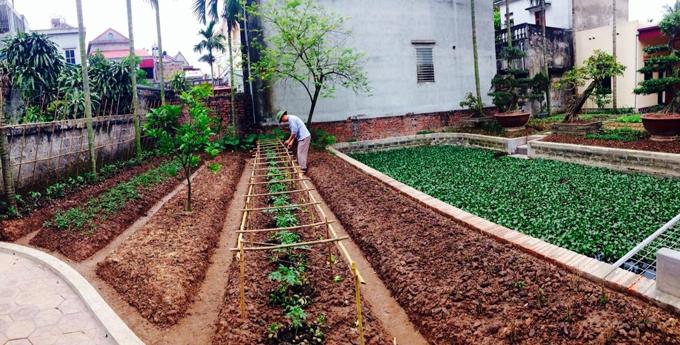Ở giữa vườn trước nhà có một cái áo nhỏ. Ao để lấy nước tưới cho vườn và có hệ thống bơm tự động.
