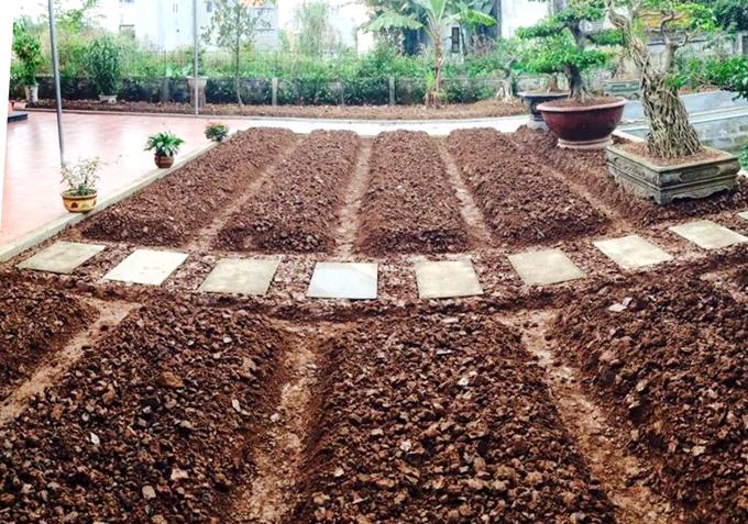 Làm luống xong, chị Sinh rắc phân gà đã xử lý rồi mới gieo trồng. Với các cây ăn quả, chị cũng rắc vôi và phân gà quanh gốc.