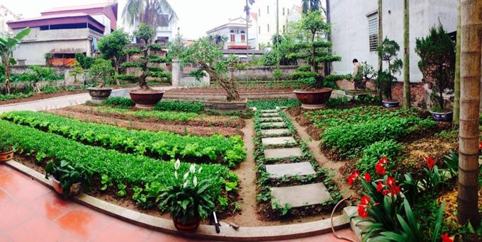 Chị Sinh bắt đầu làm đất và gieo trồng cách đây gần hai tháng. Để tôn tạo khu vườn, chị Sinh mua khoảng 90 khối đất phù sa và thuê người san phẳng.