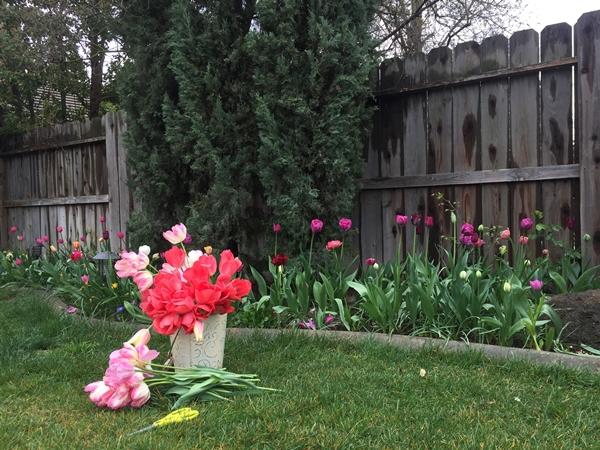 Các con của chị rất yêu khu vườn.