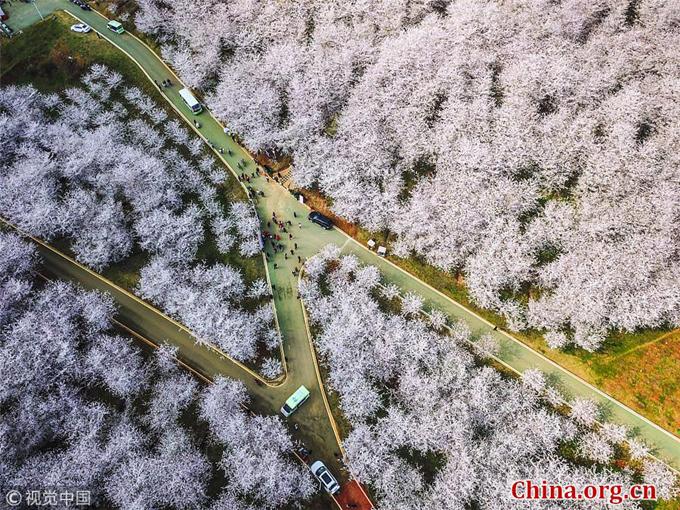 Hòn đảo hoa anh đào đẹp rụng rời ở Trung Quốc - 9